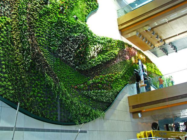 Azoteas verdes y muros verdes altra medio ambiente for Jardines verdes verticales